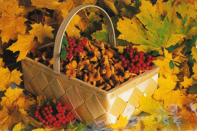 Basket of Mushrooms & Berries Postcard