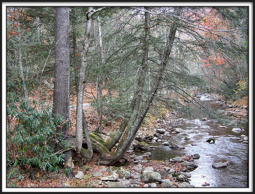 trees creek virginia stream explore virginiacreepertrail washingtoncounty proudshopper whitetoplaurelcreek