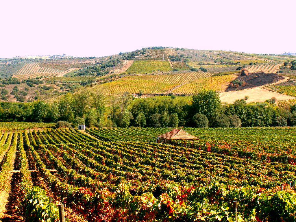 Vinhas / Vineyards