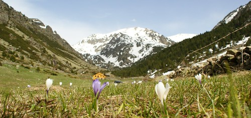 vall d'Incles   by fer55.