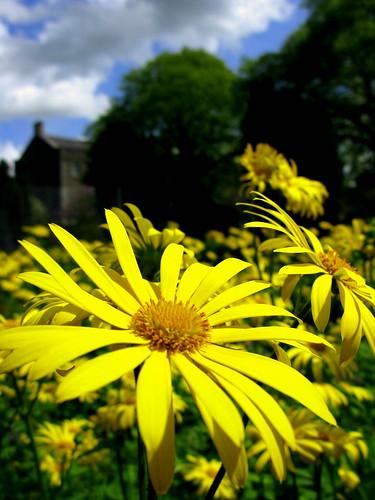 green clouds amor bluesky yellowflowers