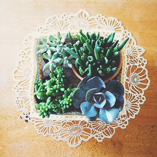 basket of succulents | by Lisa | goodknits
