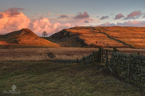 sycamore gap tree wall gate hills sunrise sunshine clouds field leefilters nisifilters formatthitech lowepro manfrotto northeast northumberland england hadrianswall photography photo foto