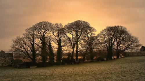 uk trees england bravo unitedkingdom romanwall pevensey pevenseycastle surelynot anawesomeshot photoshopmoi larigan phamilton goldstaraward welcomeuk