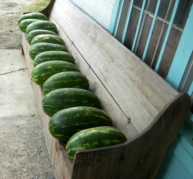 watermelon church.