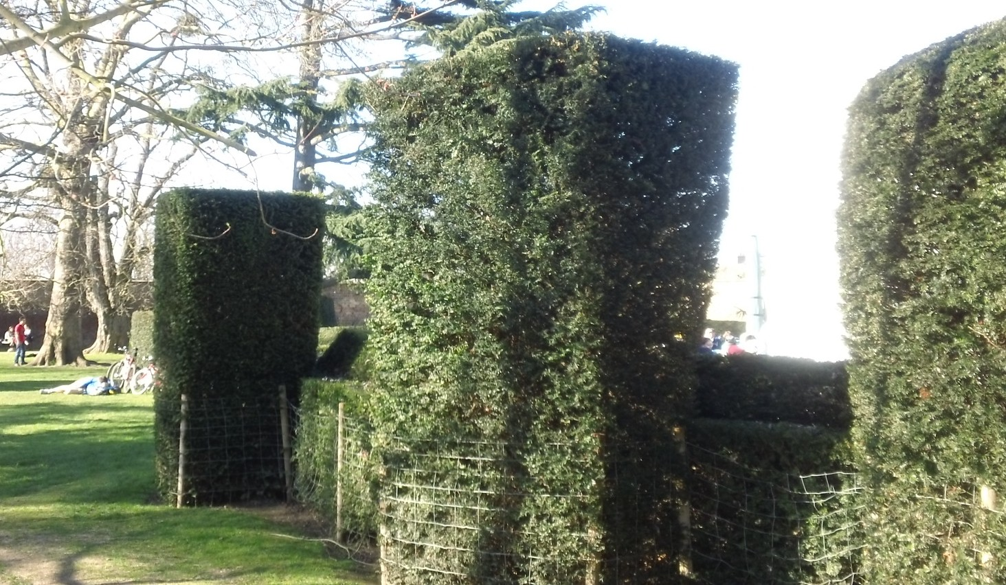 Topiaries Hedge to keep out the wind at the cafeteria entrance