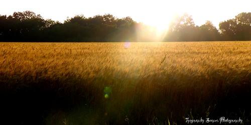 oklahoma wheat field nature farms farmlife countryliving country