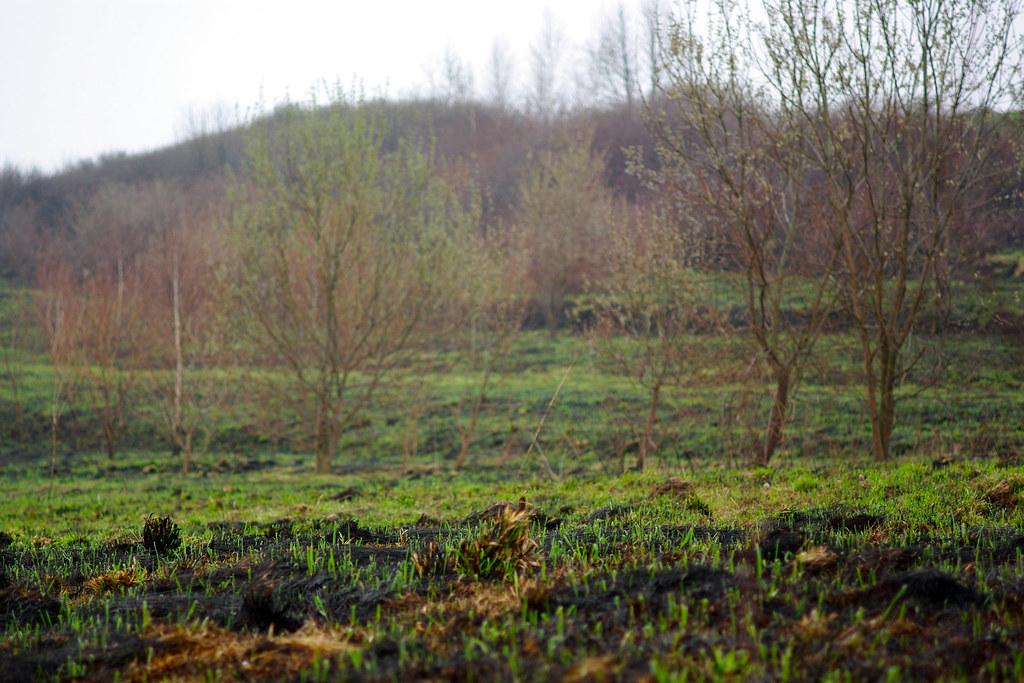 Czarna łąka / Black meadow
