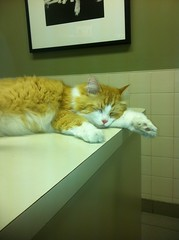 Taking a nap and waiting for a gdmd vet