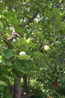 June pom poms