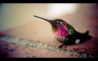Hummingbird | by isayx3