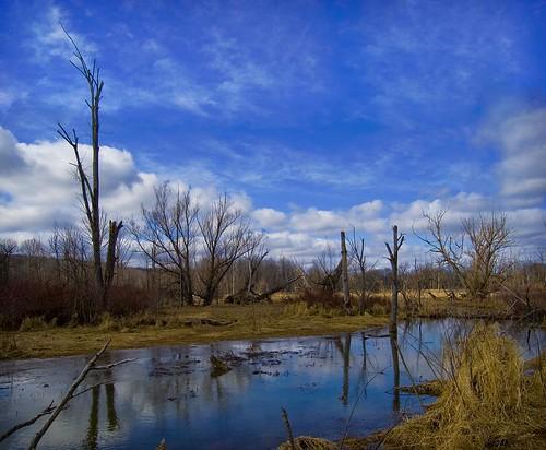 trees winter ohio nature beauty landscape bluesky na wetlands hinckley richfield clevelandmetroparks risingvalleypark
