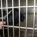 #69679 Colie mix 4 m/o male available 5/11