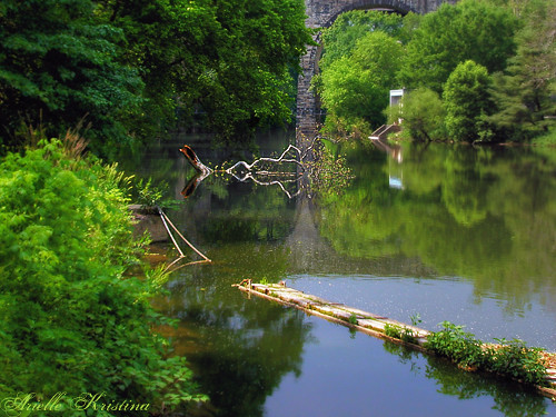bridge tree nature water creek river branch sycamore delaware wilmington arielle brandywine ariellekristina