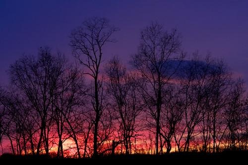 york trees sky silhouette sunrise landscape time pennsylvania aroundthehouse