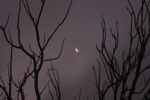 A waning moon in the dry season