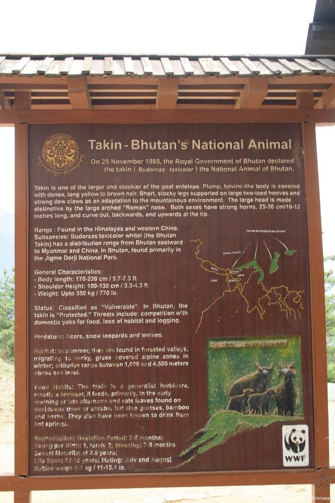 IMG_4426 Mini Zoo - Takin Bhutan's national animal | Flickr