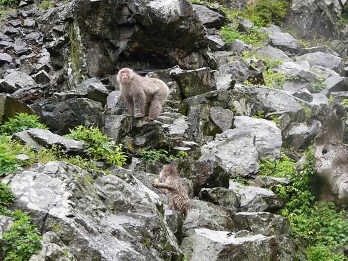 Hillside Monkeys