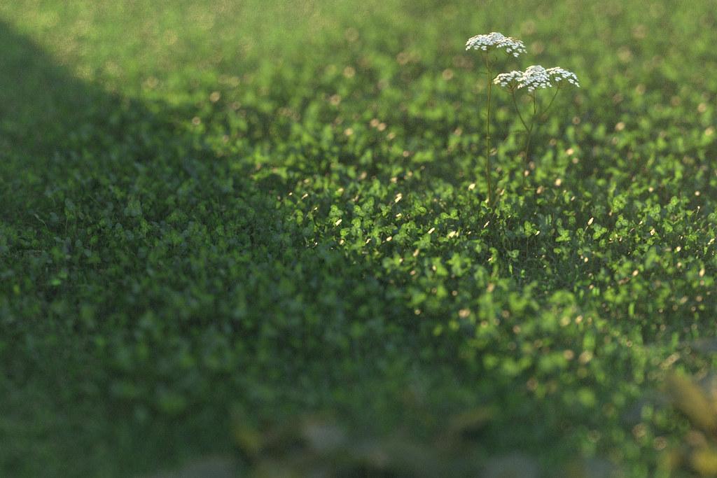 cam02_clover by Peter Guthrie