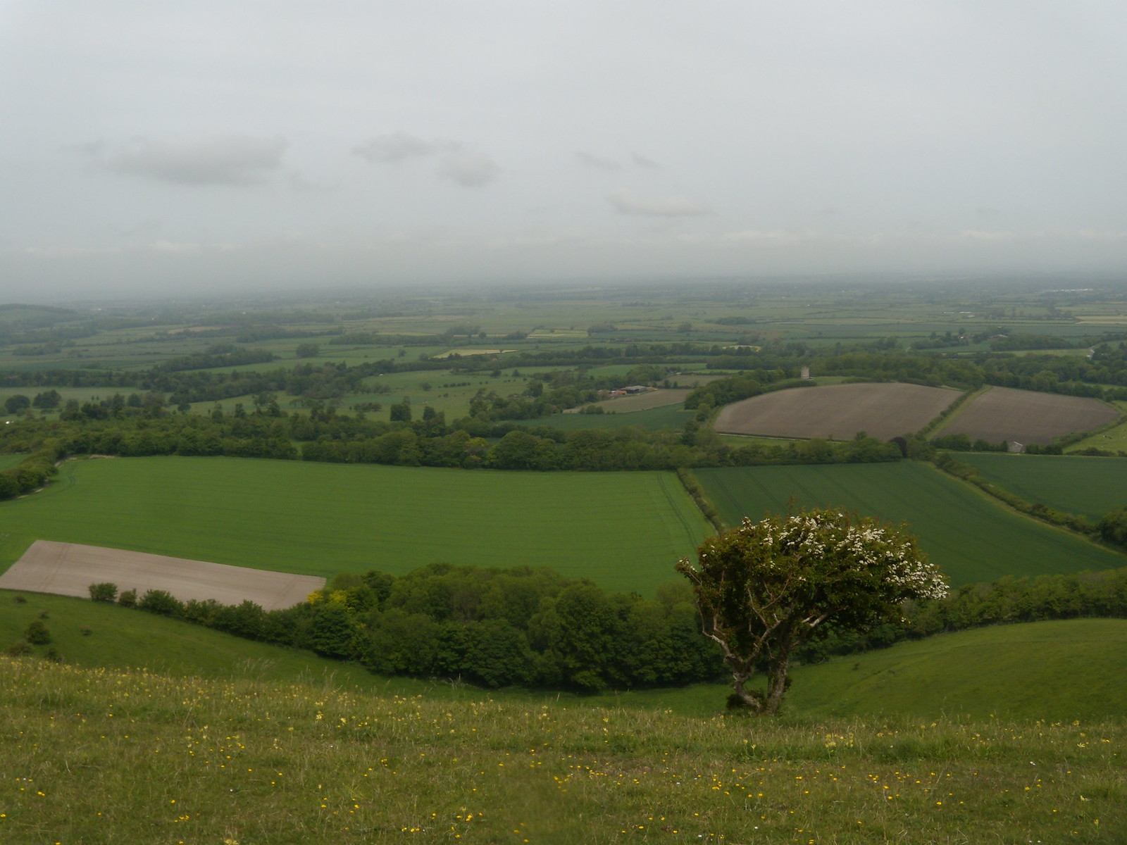 View from the downs - above Firle Glynde to Seaford