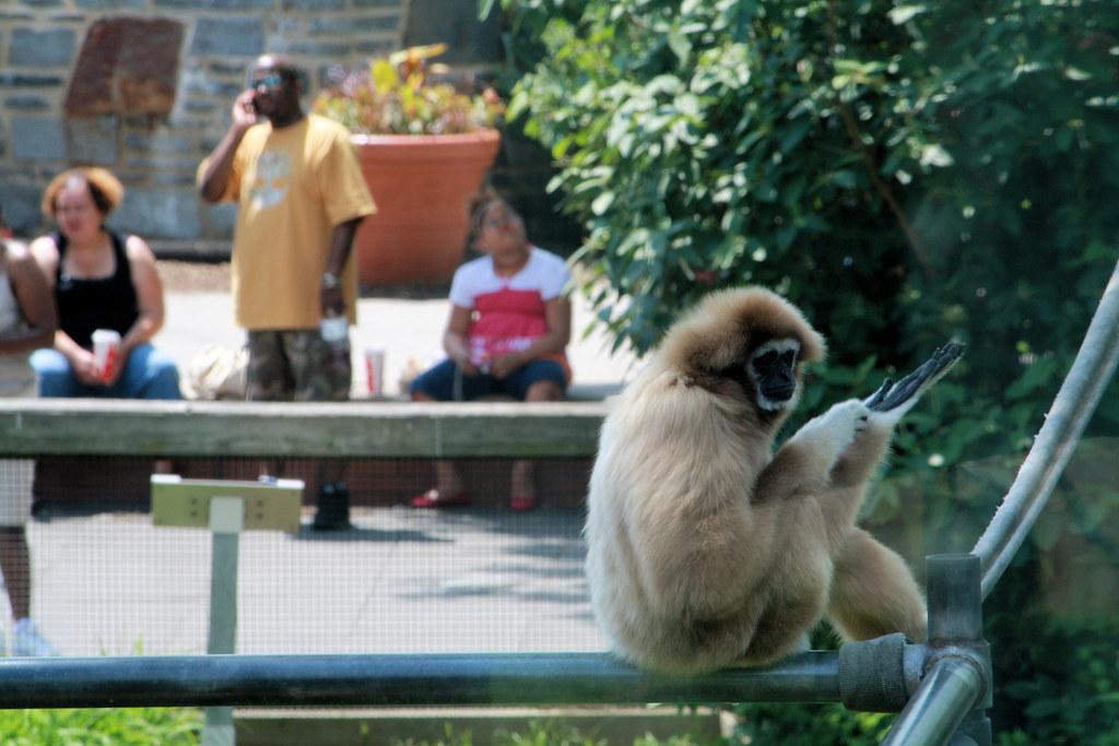 Monkey Biznezz by UrbanPerspectiV