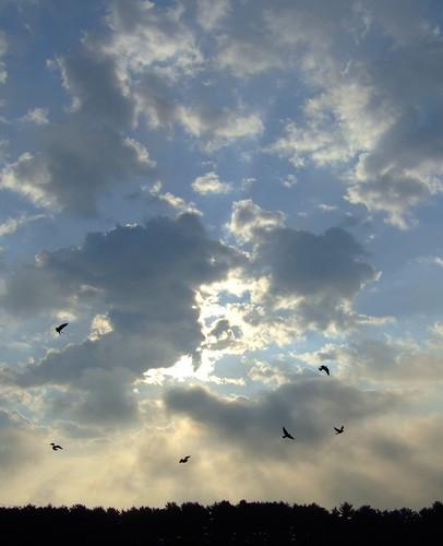 sky skies clouds sun moon stars work sunrise spring johnjmurphyiii dawn hamden connecticut usa 06514 fave 1 cloudsstormssunsetssunrises cloudscape weather nature cloud watching photography photographic photos day theme light dramatic outdoor color colour