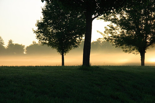 trees mist nature field sunrise virginia stanton