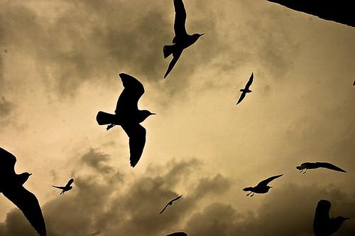 Cielo sobre el Bósforo (Estambul)