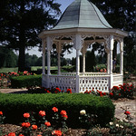 Wed, 10/23/2002 - 5:18pm - Richmond Rose Gardens.  You'll find hundrends of roses in this public rose garden located in Glen Miller Park.