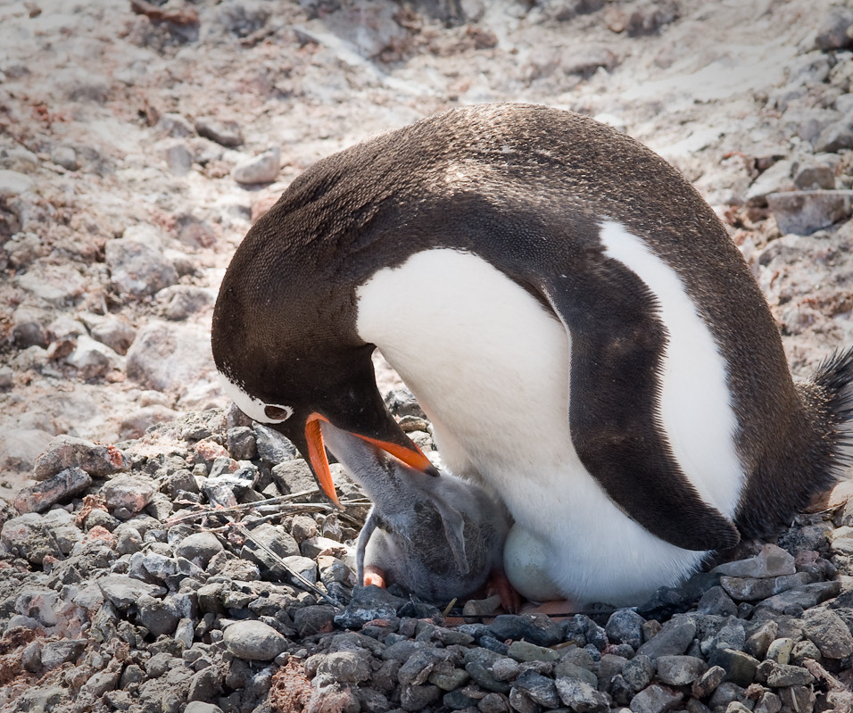 I think I found your keys, mommy!