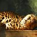 Cat Nap by robbymilo1