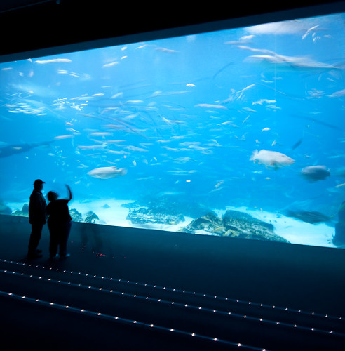 Atlanta Aquarium (The OMG Window) | by @HandstandSam