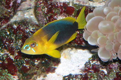 Shay hamlet | by keywest aquarium