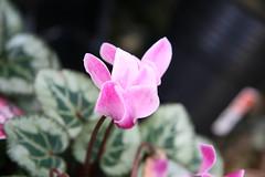 Bellflower gardens - 36