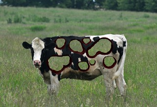 Cow Art 3 | by CaptPiper