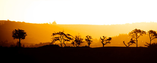 Maui Trees at Sunrise | by dvanvliet