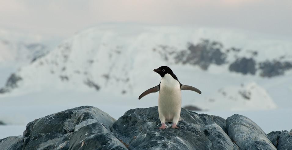 Poser Penguin