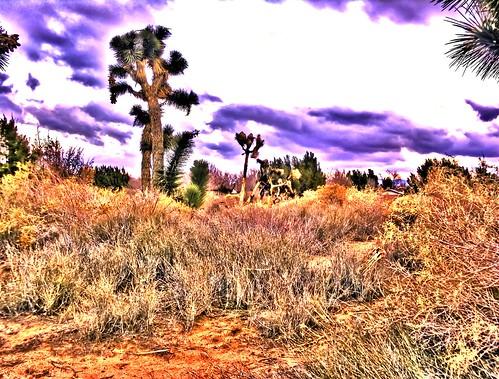 trees tree nature desert joshuatree mojave mojavedesert mohave desertsunset naturesfinest mohavedesert goldstaraward quantummottle2 joelach
