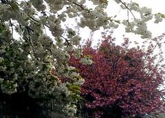 blossom near work