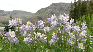 columbines_Trappers_Lake_CO | by J B Foster