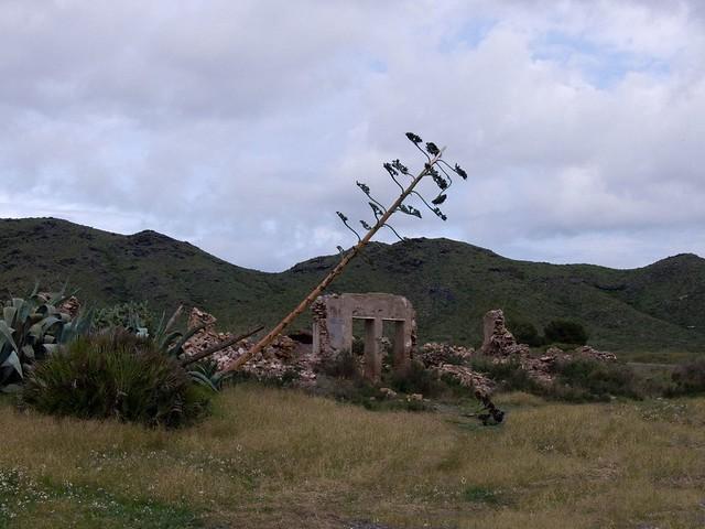 Parque natural de Calblanque (06-01-2009)
