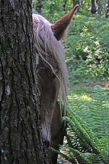 """Wild, Wild Horses"" - Peekaboo"