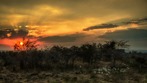 sunset india nature night landscape sheep cloudy ngc bangalore shepard omkarhills
