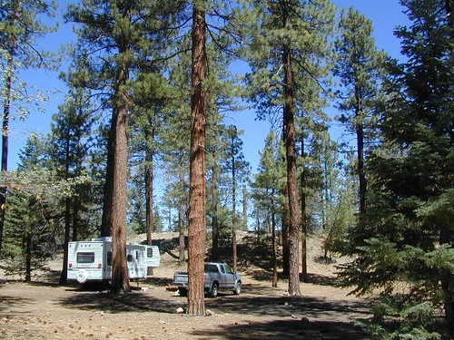 Campers in Forest
