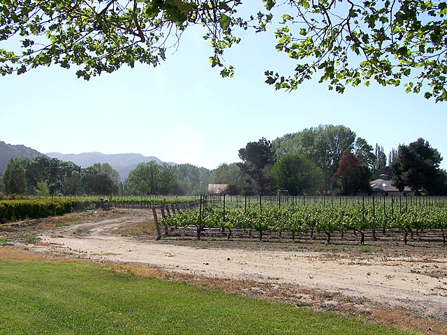 Shoestring Winery 8