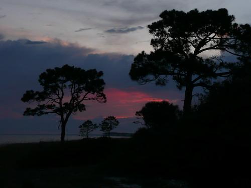 trees sunset vacation fl 2009 alligatorpointflorida
