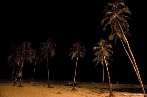 india tree beach night palms geotagged goa 1855 colva 2007 yellowlight d40 adityabhelke geo:lat=15275802 geo:lon=73914042