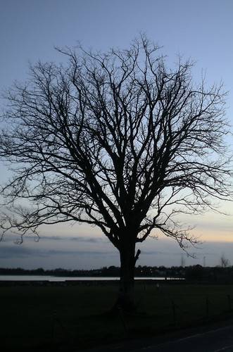 sunset tree loughrea awesometrees
