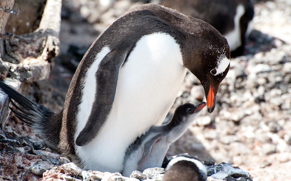 Antarctic Eskimo Kisses