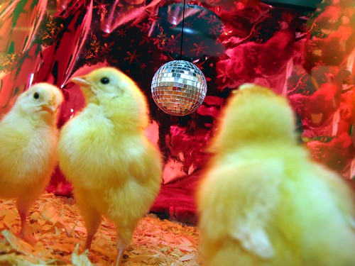 chicks on the dance floor